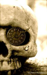 Skull - Lisa Roberts Photography