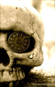 Skull - Lisa Roberts Photography