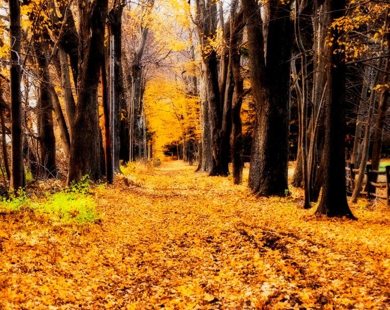 Wooded Path - Lisa Roberts Photography
