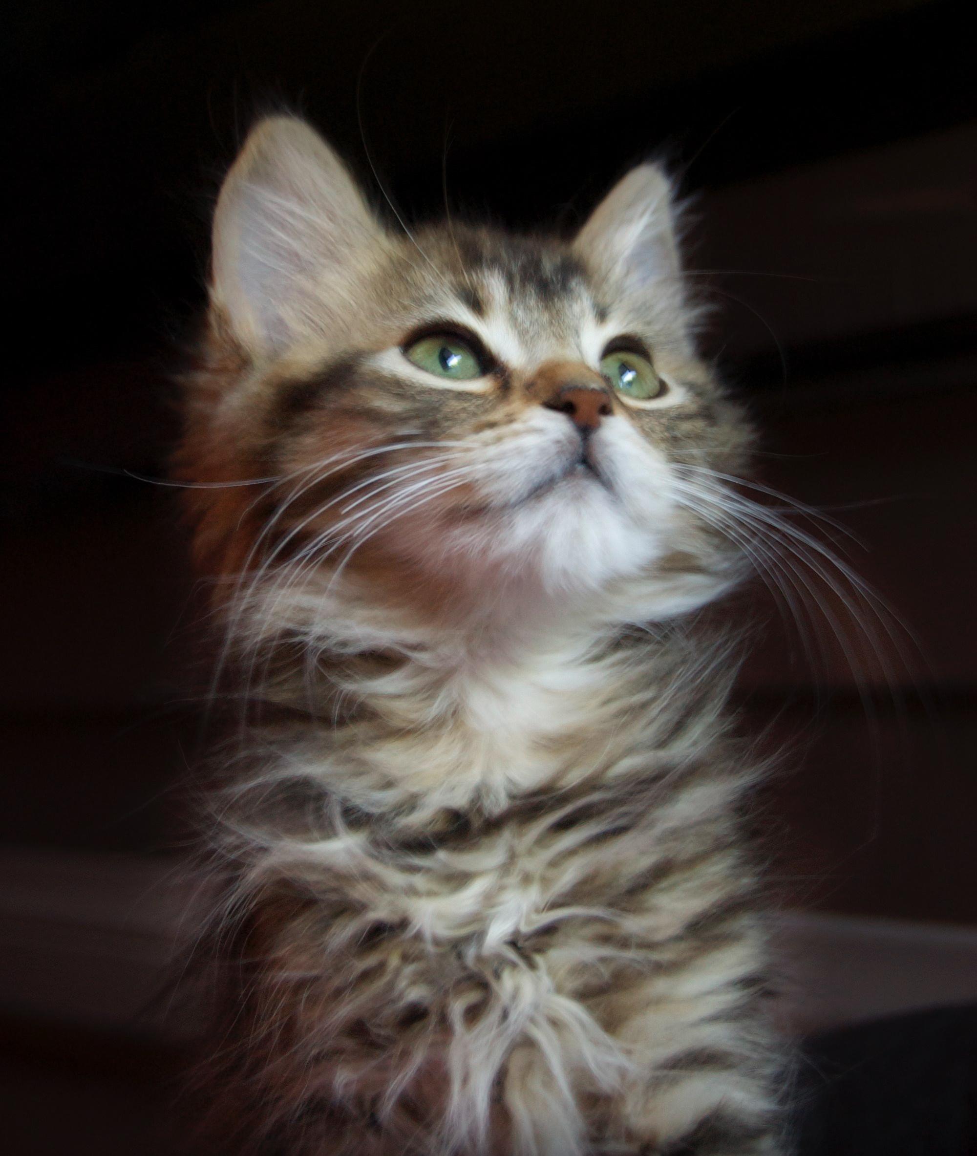 close-up-kitten.jpg